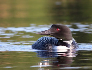loon2_8_7_ps